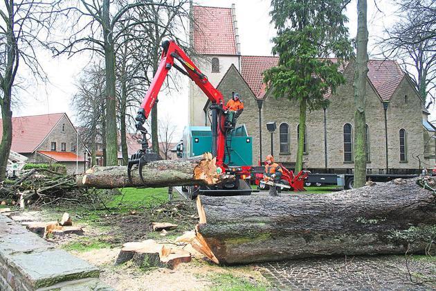 14 Bäume werden an der Eggeroder Kirche gefällt